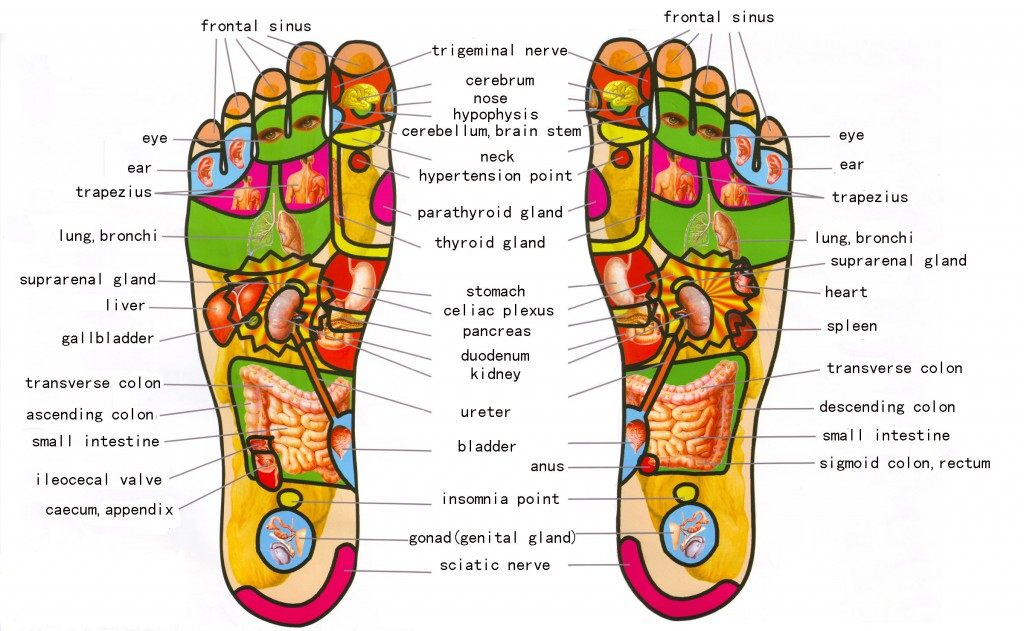 Credit: reflexology-map.com